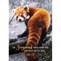 """""""Carte : Panda roux sur une branche"""""""